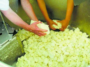 Cheese making.  Cheddaring: breaking the curd.  Courtesy of Flickr