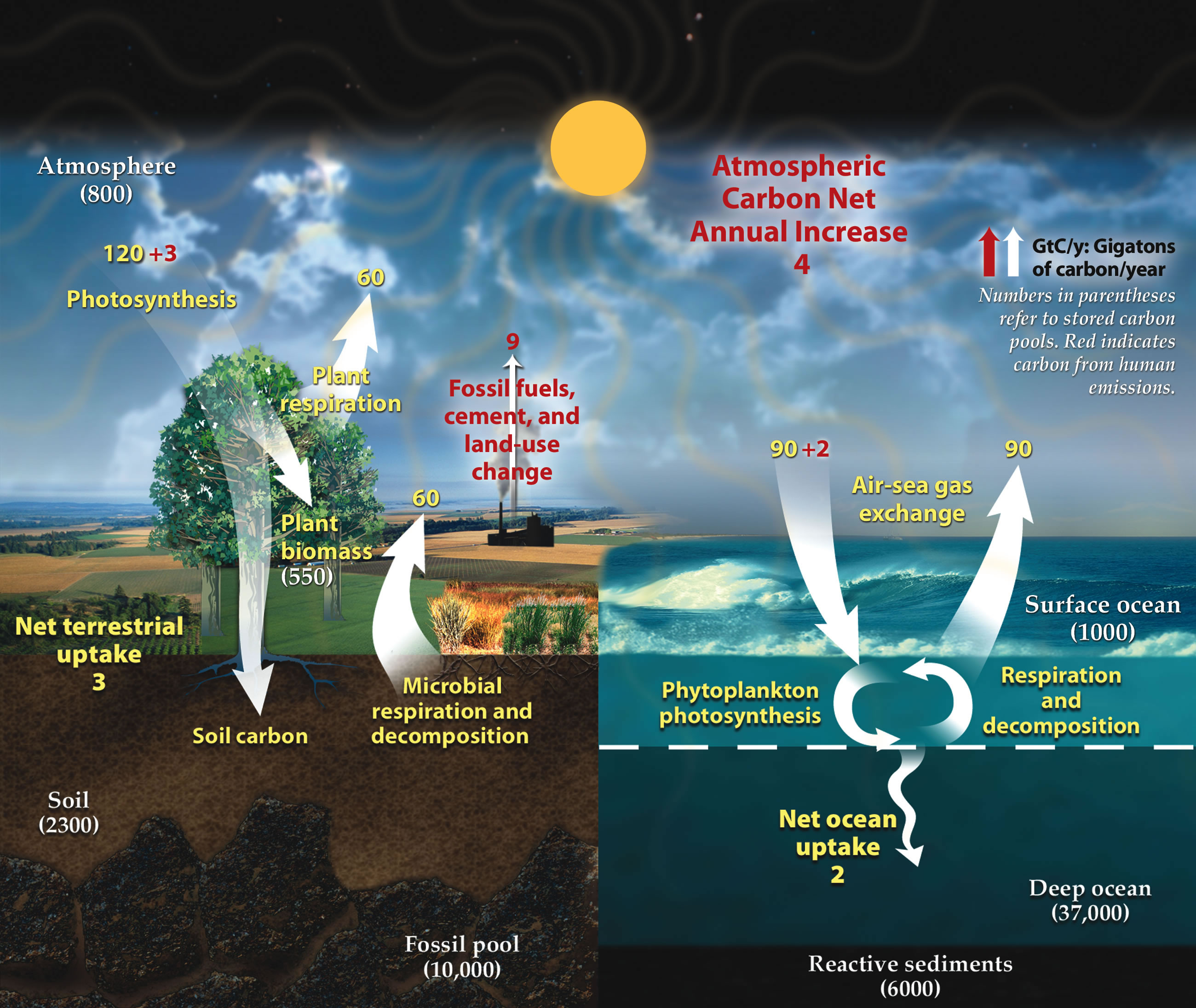 Carbon Cycle ORNL