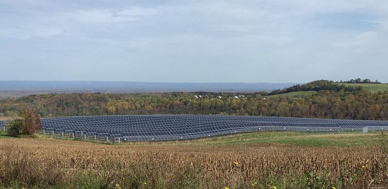 Madison County's solar array (Photo: Ellen Abbot | WRVO News)