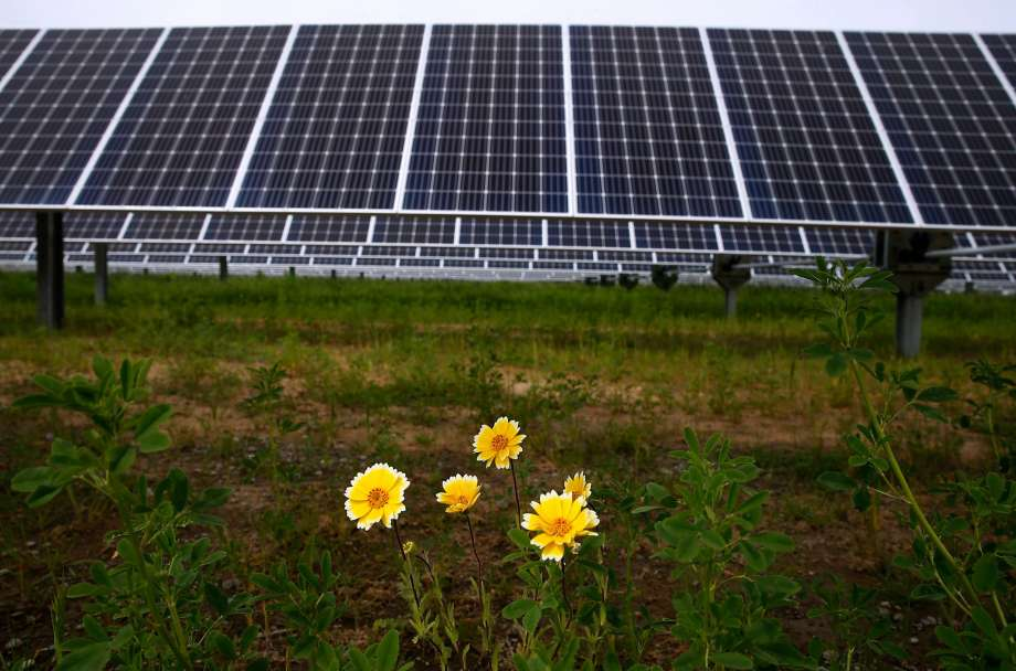Wildflowers and solar panels (Photo: Paul Chinn | The Chronicle)